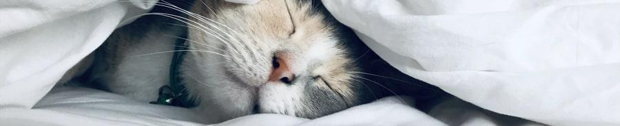 somnul a făcut mulți bani câștigând bani pe Internet fără a invita pe nimeni